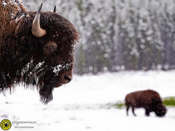 Exposición fotográfica de Juan Pérez-Fajardo - Yellowstone 2
